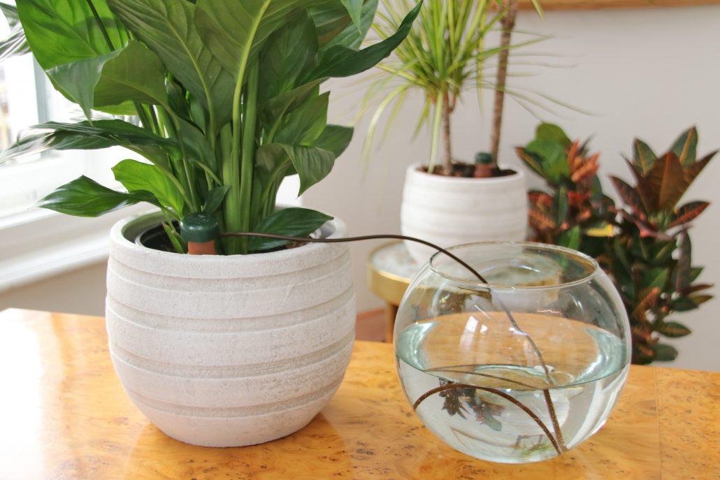 Tonkegel Bewässerung blumat blumat für zimmerpflanzen